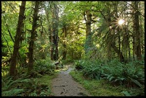 Path in the Hoh Rain forest in Olympic National Park for beauty of Eden of the creation ministry speaking topics