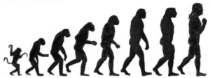 800px-darwin-chart